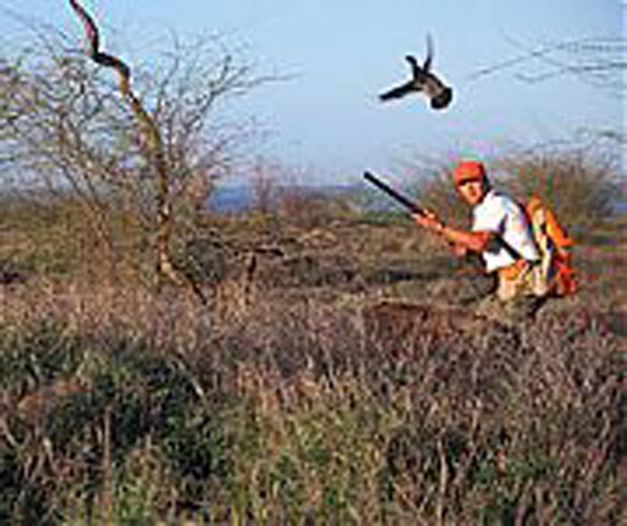 Hawaii Game Bird Hunting